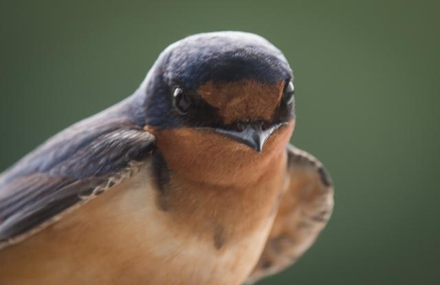 birdbanding 5_12_17-6