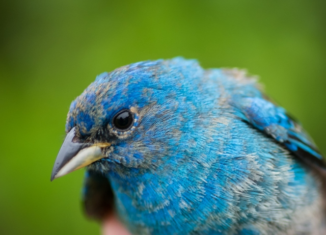 birdbanding 05_12_17-27