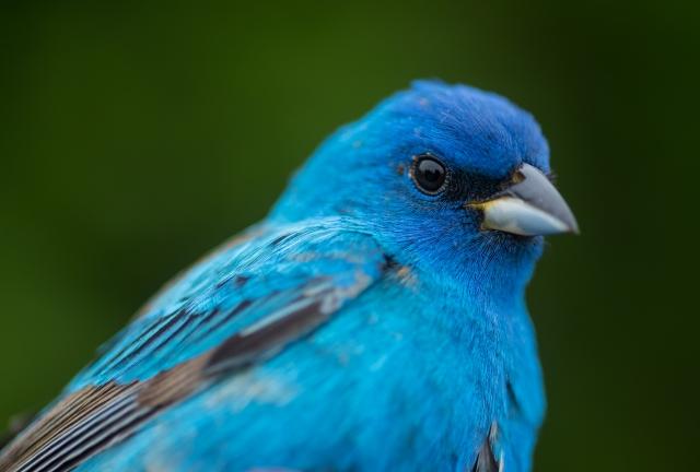 birdbanding 05_12_17-64